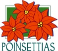 poinsettias_3461c