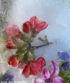 iceflower2